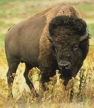 insert picture WordPress buffalo